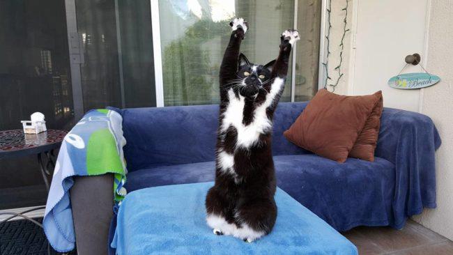 Gatinho joga os braços para alto