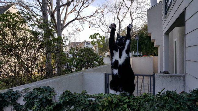 Gatinho joga os braços para o alto sempre