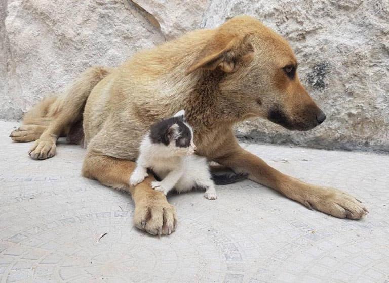 Gatinho órfão foi adotado por cadela
