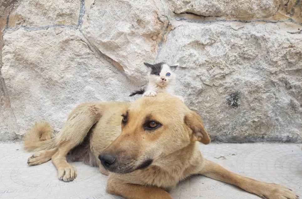 Gatinho órfão foi adotado