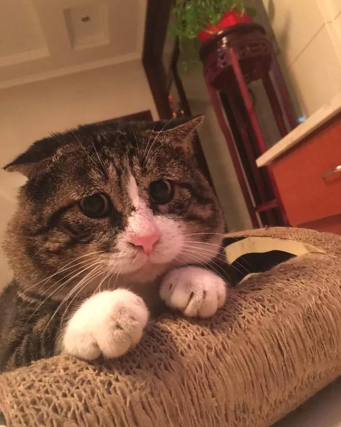 Gato com o rosto mais expressivo de todos