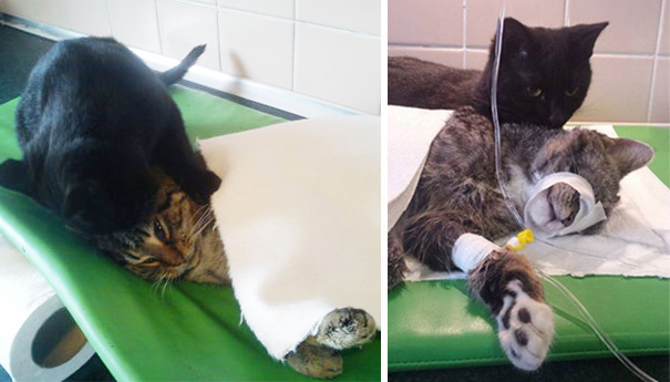 Gato resgatado por veterinários salva
