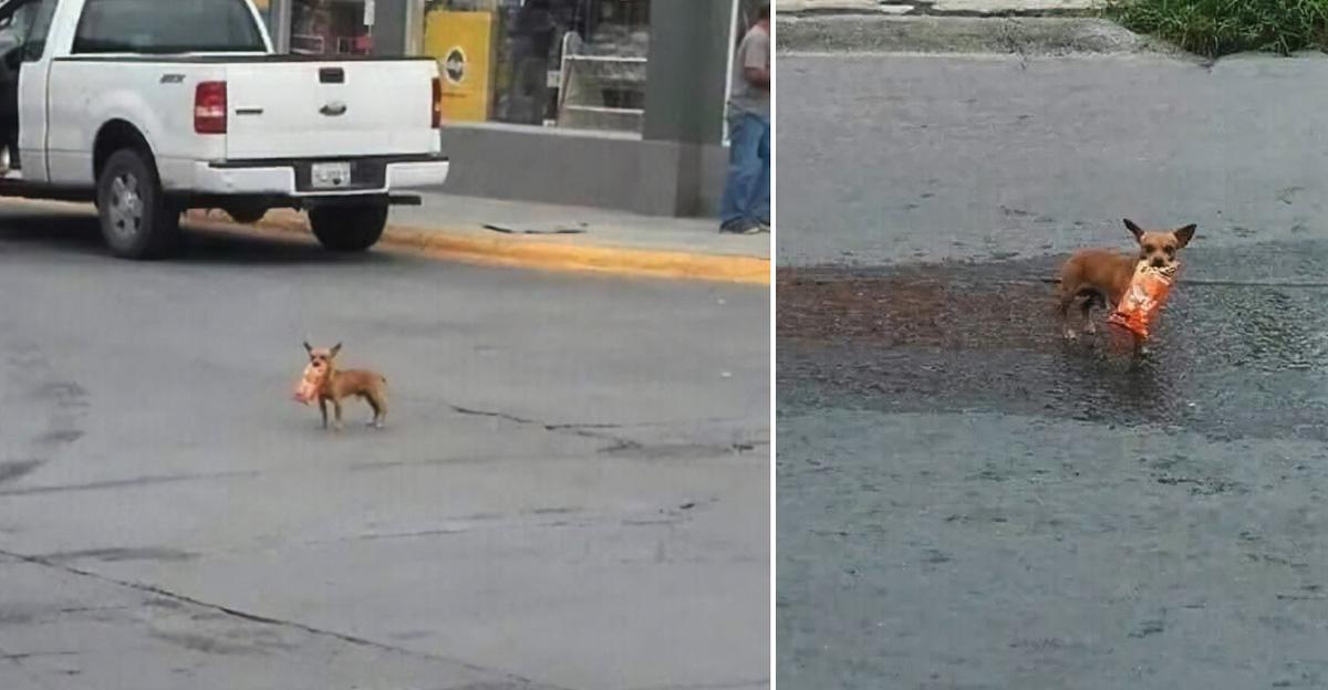 Homem em quarentena envia cachorrinho