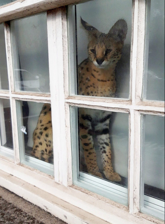 Homem foi multado gato selvagem