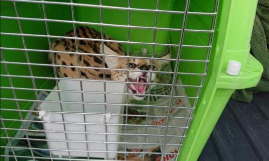 Homem foi multado serval
