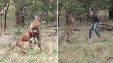 Homem sai no braço com canguru que bateu no cachorro dele