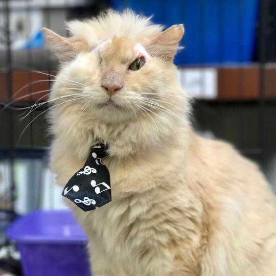 Mulher dá a gatos doentes um lar amoroso para morrerem