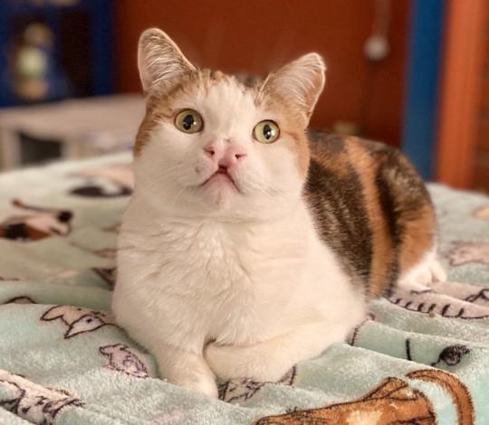 Mulher dá a gatos doentes um lar