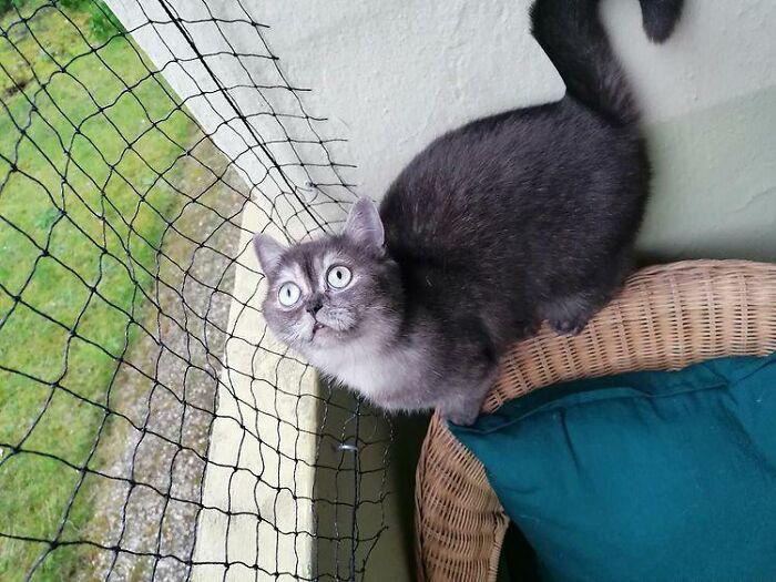 Mulher se apaixona por gatinha considerada feia