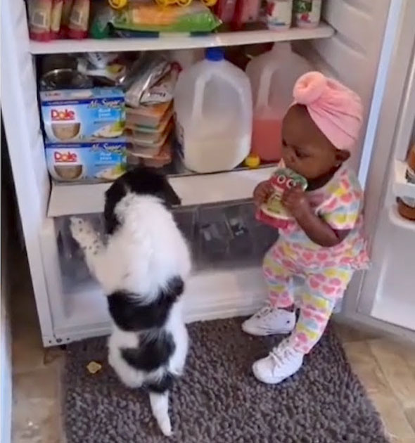 Pai flagra bebê e cachorrinho geladeira