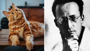 A curiosidade matou o gato: De onde surgiu essa frase?