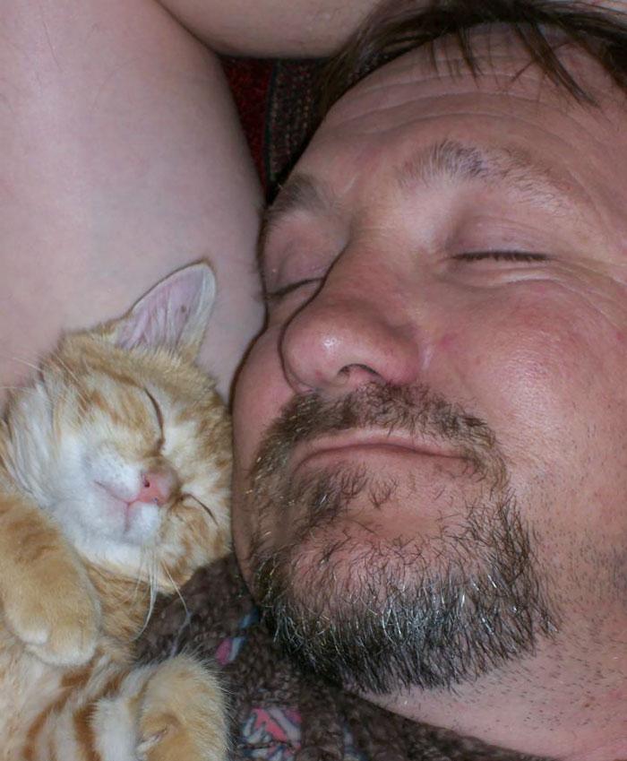 amor por gatos