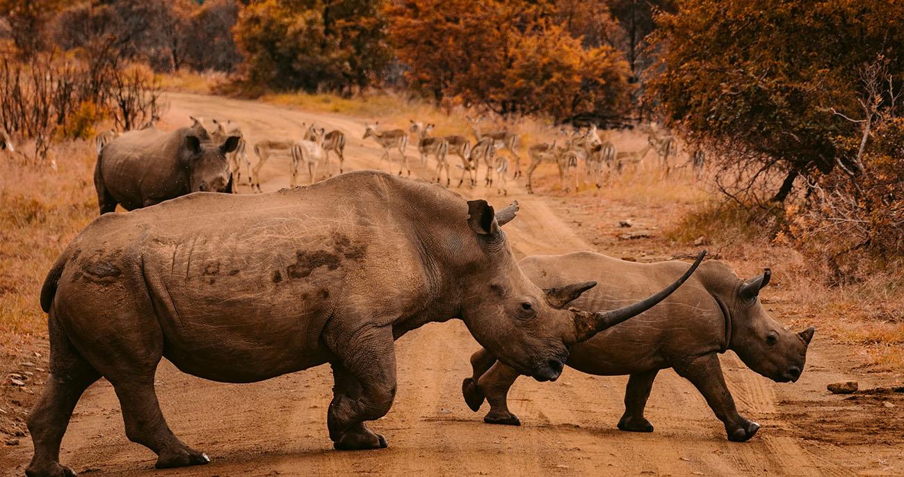 animais do continente africano
