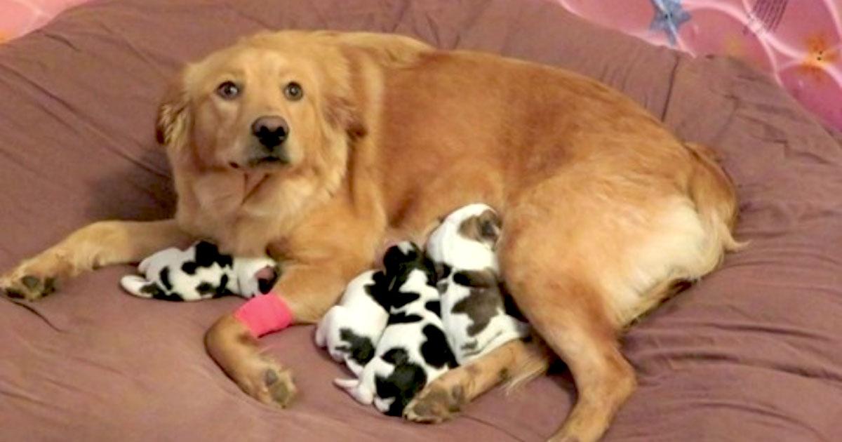 bebê que parecem vacas