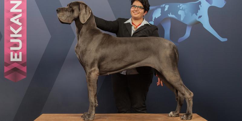 cachorro mais alto do mundo
