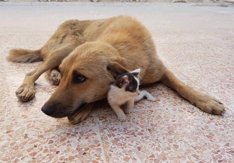 cachorro adota gato