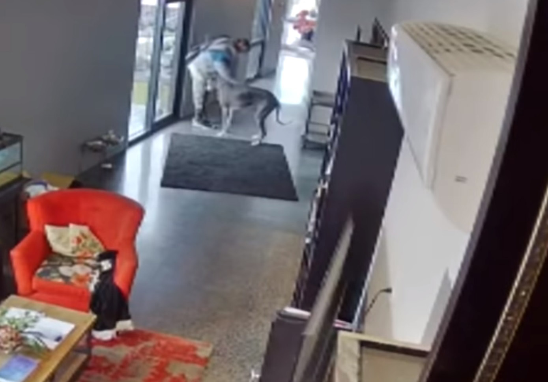 cachorro ataca invasor