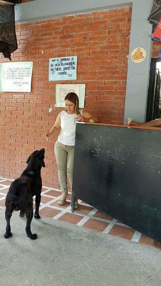 cachorro de escola