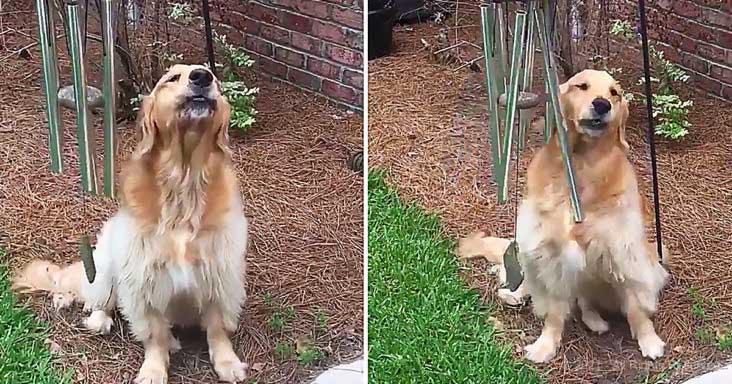 cachorro e sinos de vento