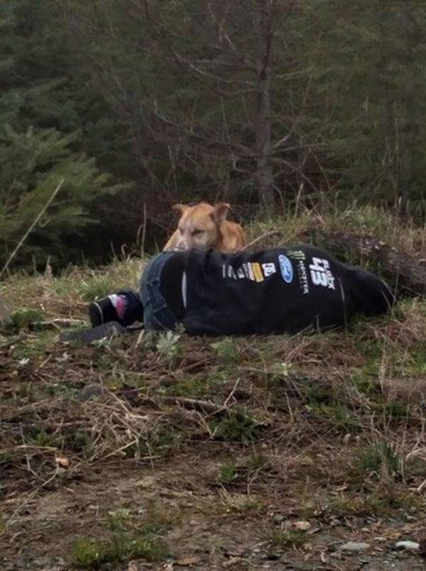 cachorro na floresta
