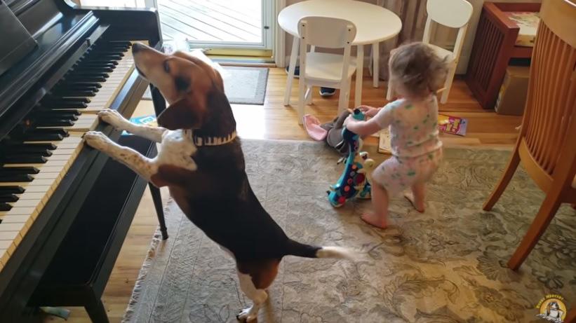 cachorro toca piano e bebê dança