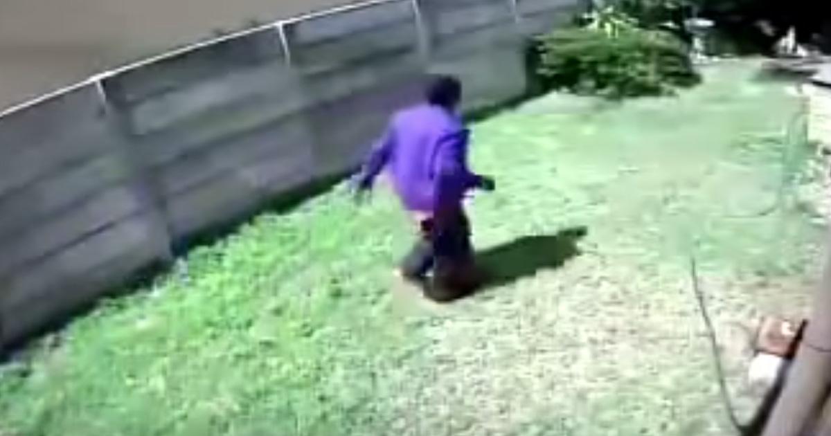 cão de guarda minúsculo ladrão