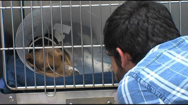 cão salvo em estrada