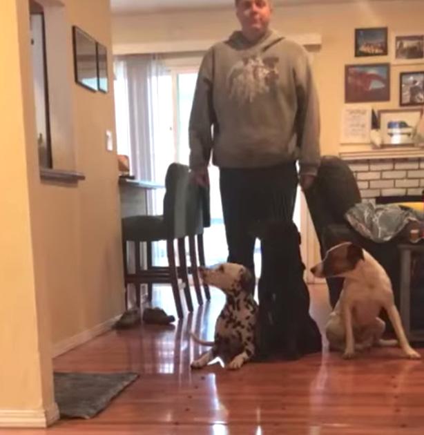 corrida de cachorros