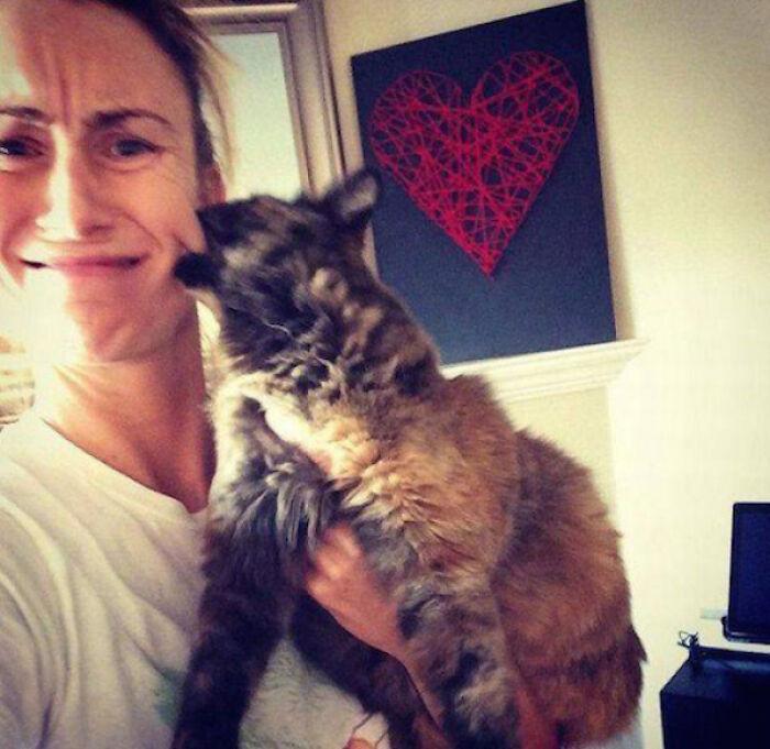 esses gatos odeiam abraços fotos