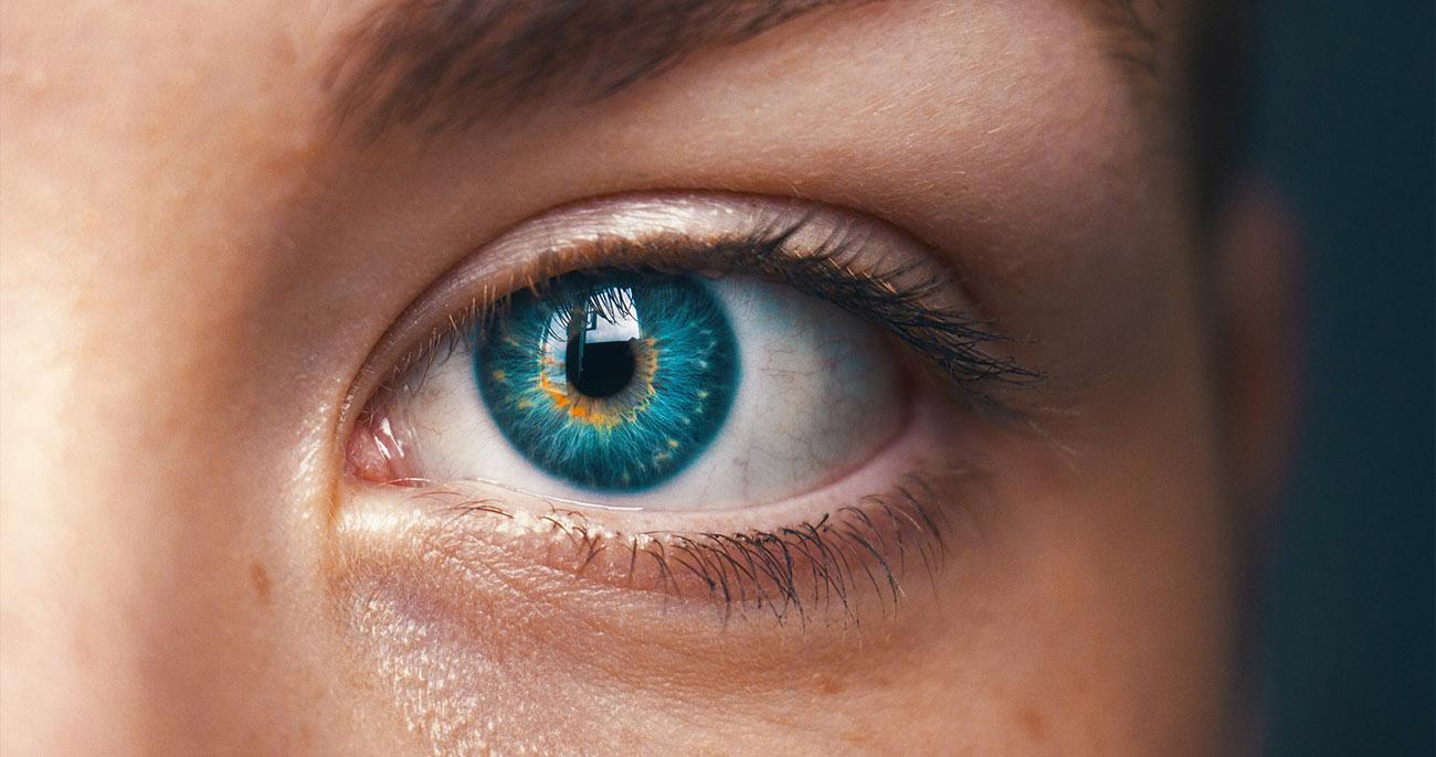 fatos sobre o olho