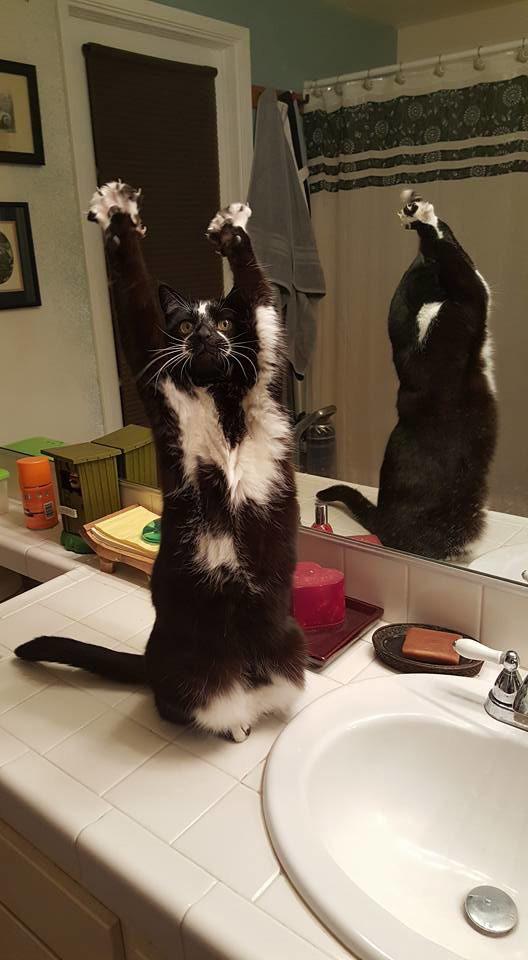 gatinho engraçado