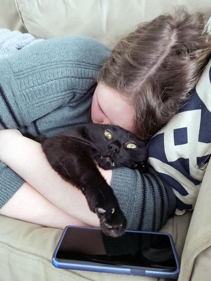 gatinhos fofos com donos