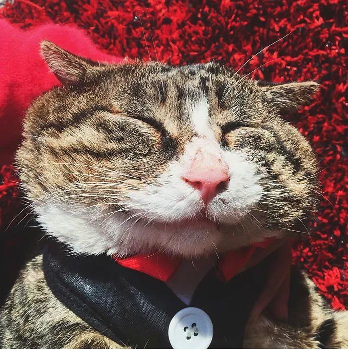 gato com o rosto mais expressivo da internet