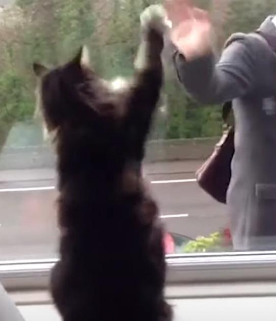 gato educado e amistoso janela