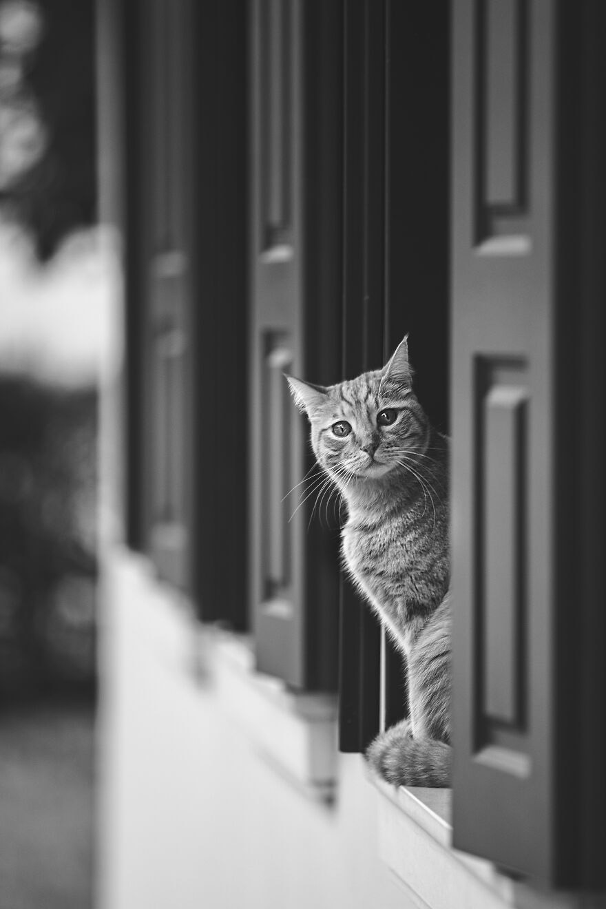gatos amam janelas