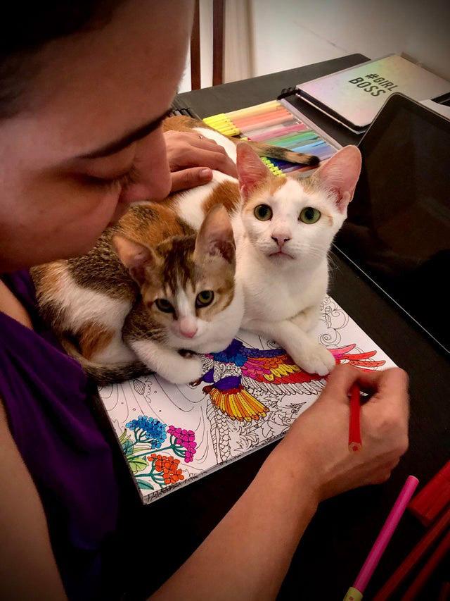 gatos com donos em casa