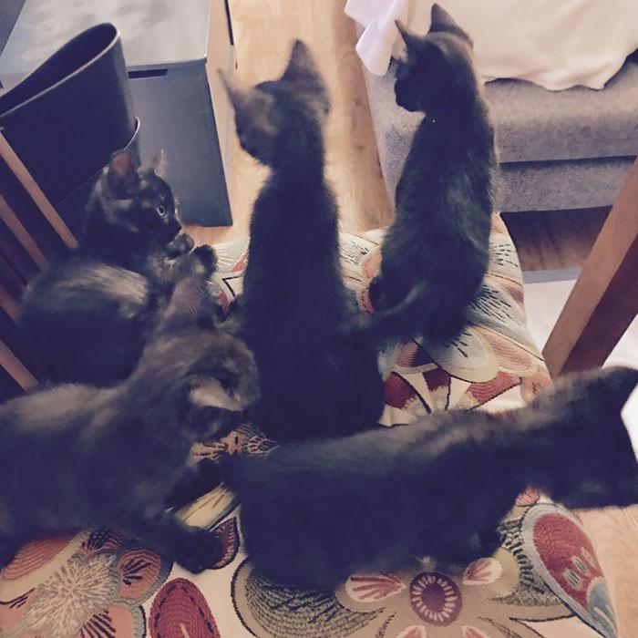 gatos em casa