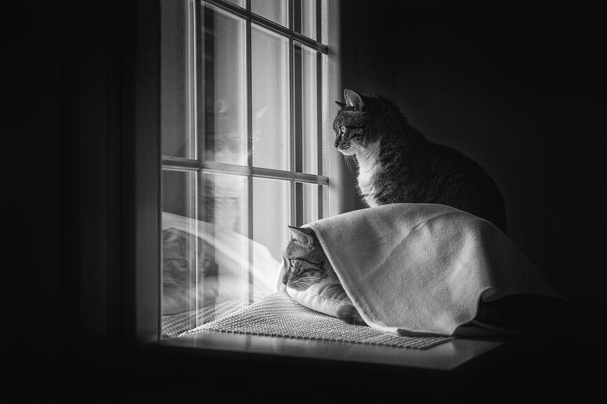 gatos em janelas