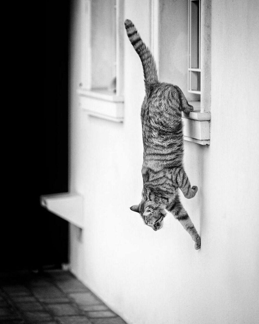 gatos nas janelas