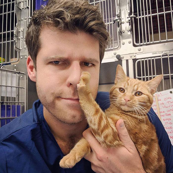 gatos que odeiam abraçar
