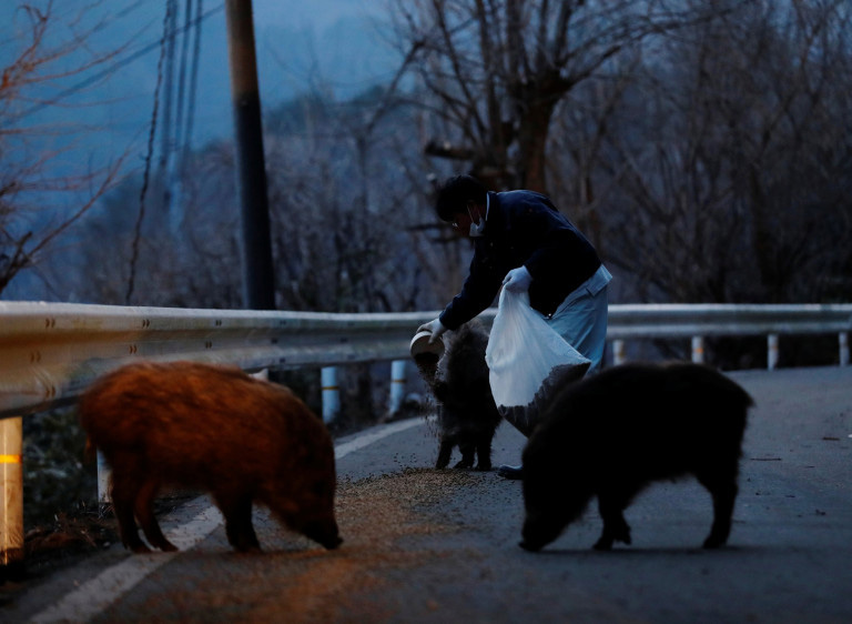 gatos resgatados Fukushima