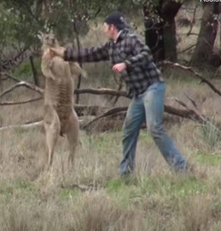 homem bate em canguru