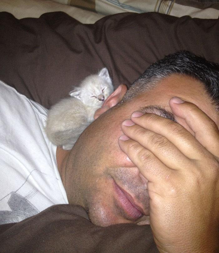 homem que odiava gatos