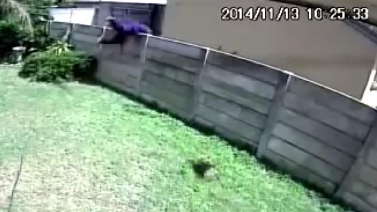 ladrão cão de guarda