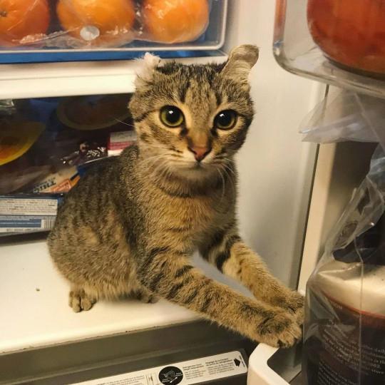 lar de acolhimento para gatos