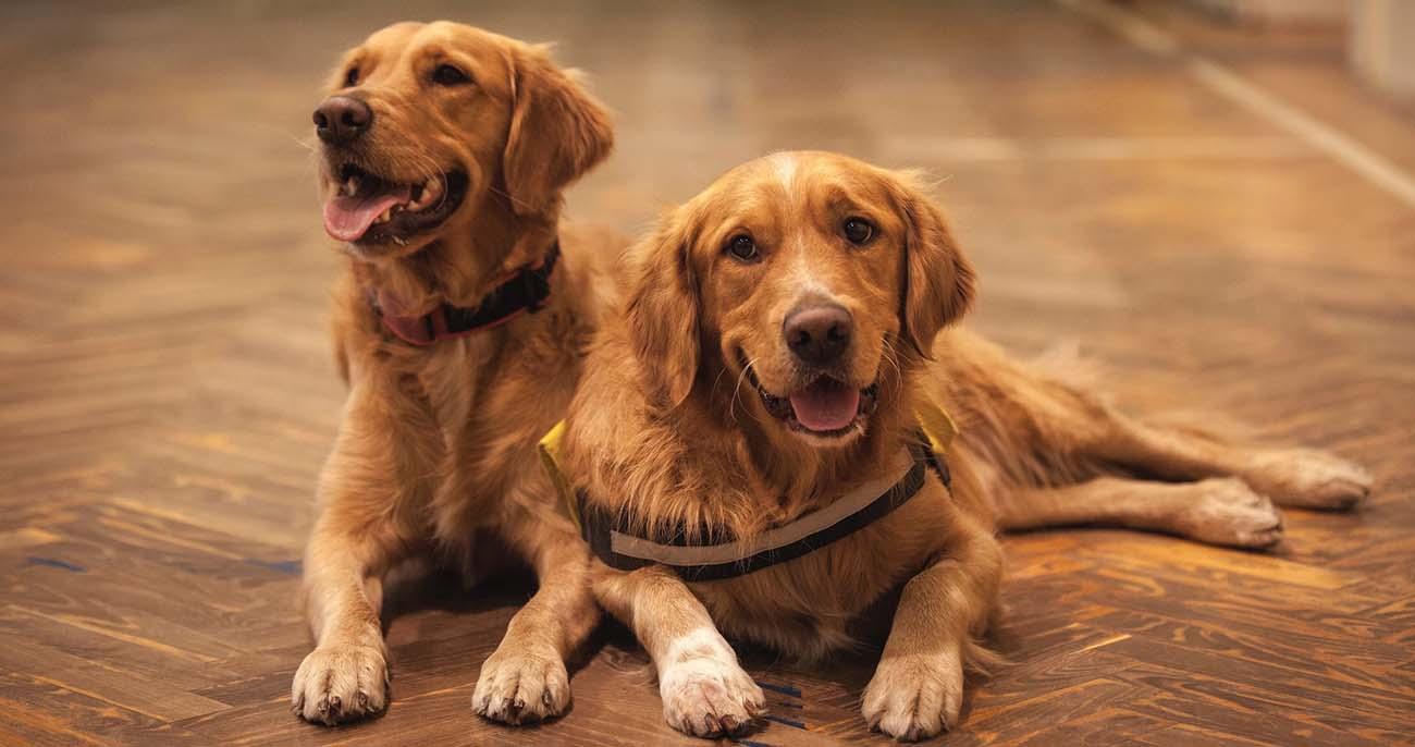 melhores cachorros do mundo