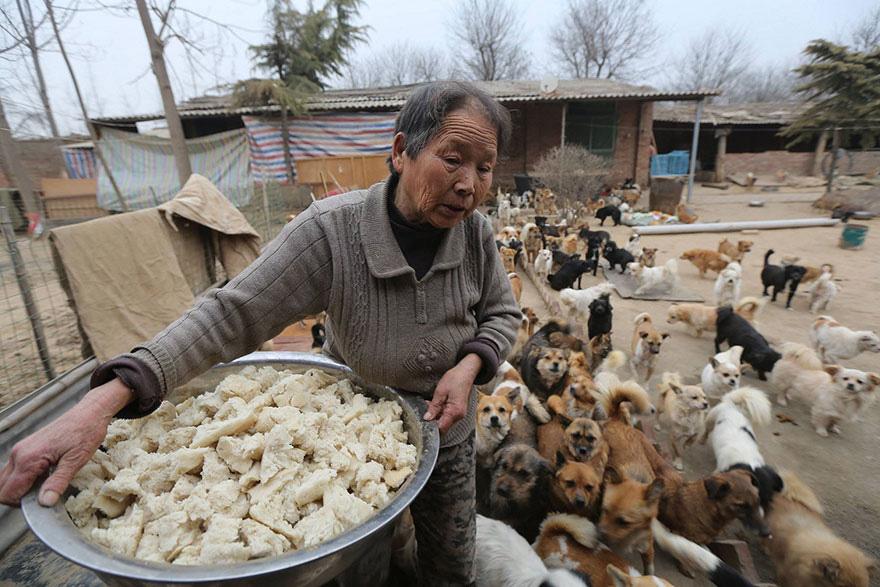 mulher acorda para cuida de de cachorros