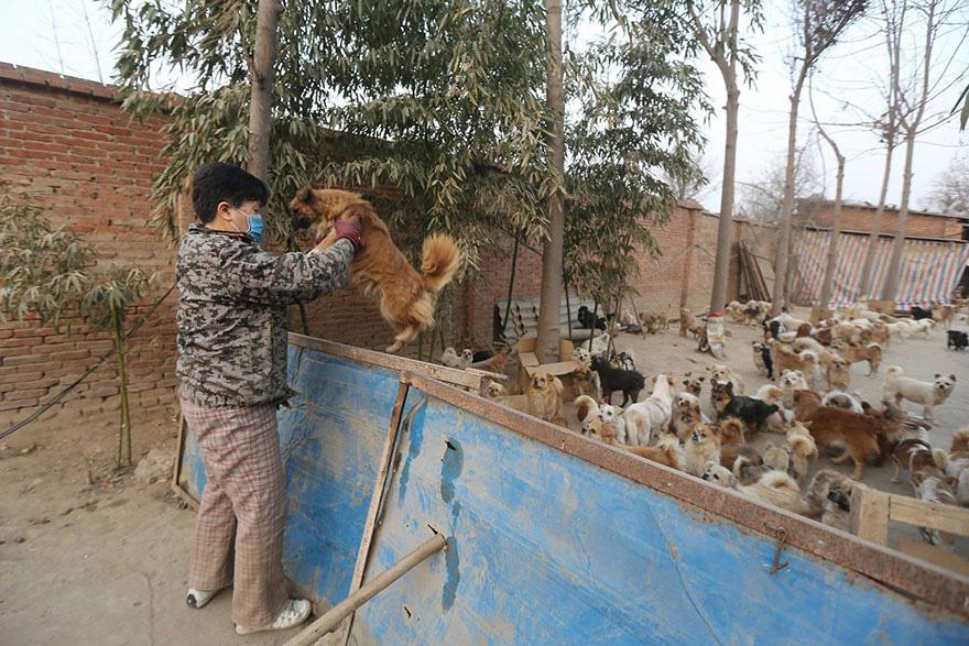 mulher cuida de milhares de cachorros