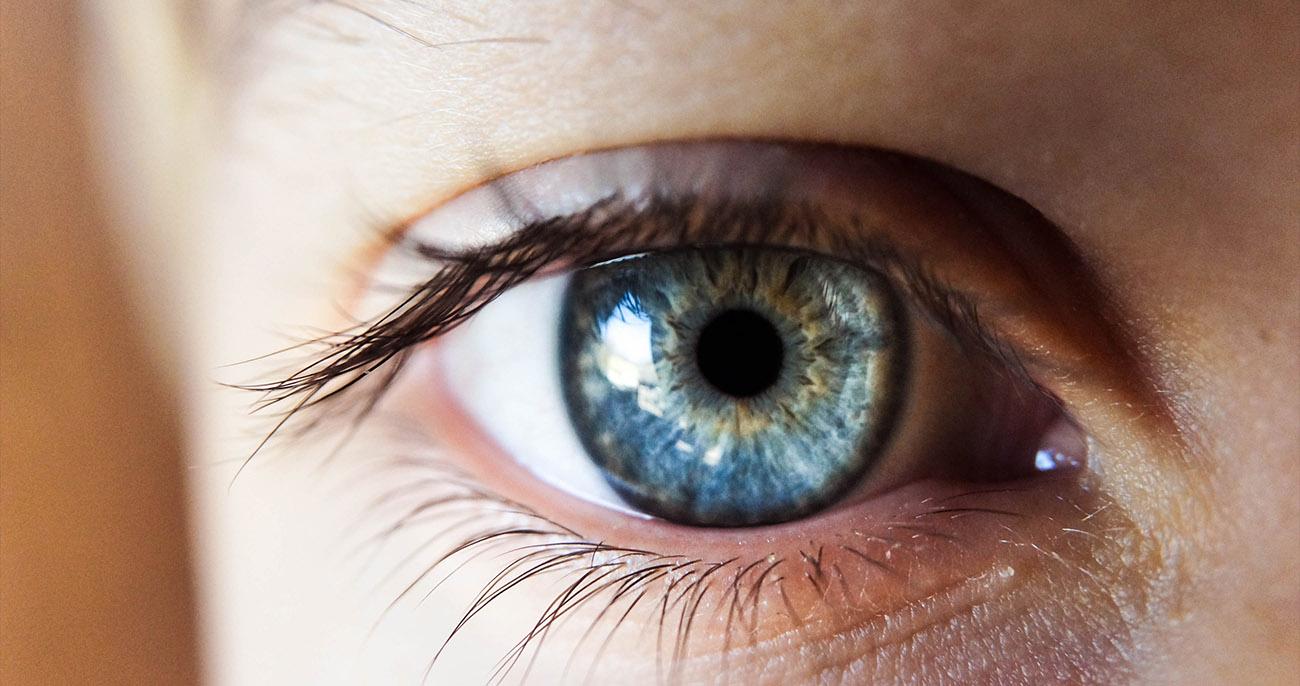 olho humano fatos