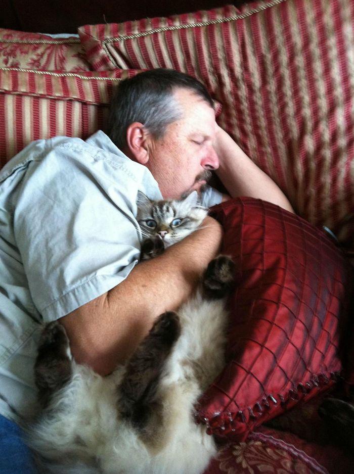pessoas que não querem saber de gatos casa